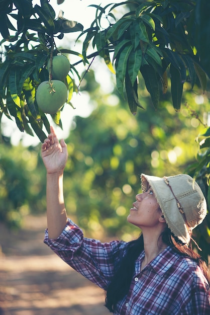 Farmers are checking mango quality, young smart famers concept Premium Photo