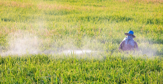 Farmers are spraying crops in a green field. Premium Photo