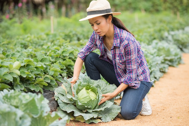 Farmers are working in cabbage farm Free Photo