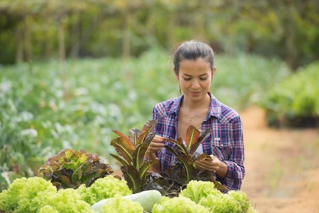 Farmers are working in green oak lettuce farm Free Photo