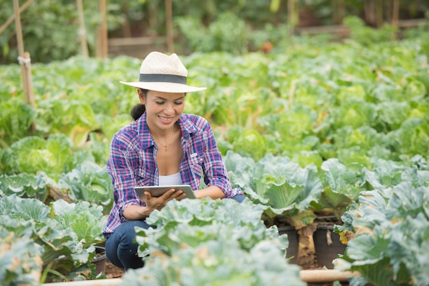 Farmers are working in vegetable farm.  checking vegetable plants using digital tablet Free Photo