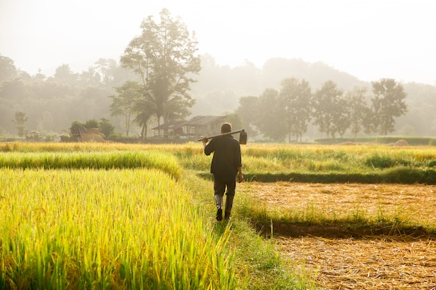 Farmers carrying spades at the field. Premium Photo