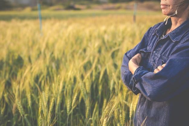 Farmers harvest barley happily. Free Photo