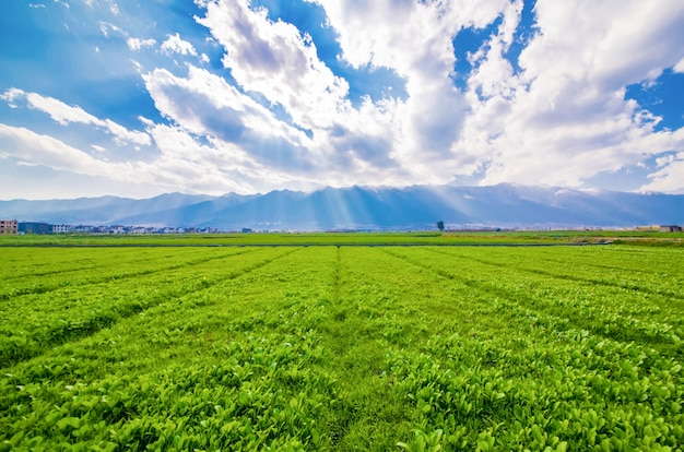 Сельхозугодий Бесплатные Фотографии
