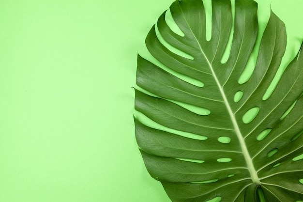 Fashion background with monstera leaf Premium Photo