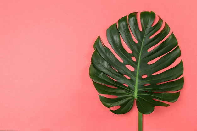 Fashion background with monstera leaf Premium Photo