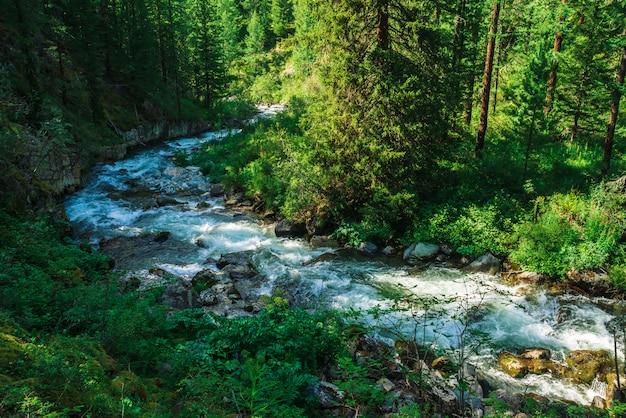 Fast serpentine stream in wild mountain creek in valley. Premium Photo