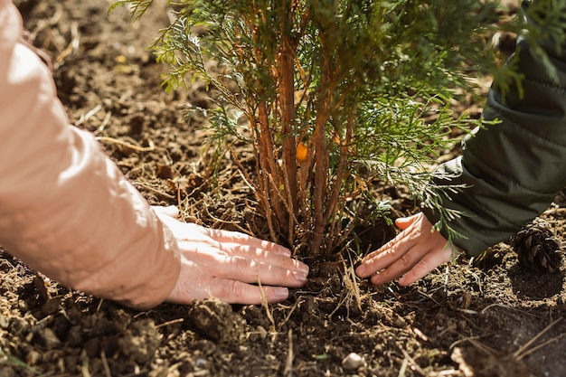 Father and son planting a tree together outdoors Free Photo