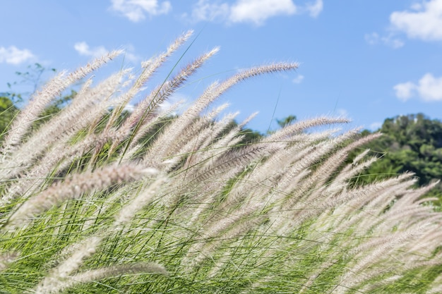 Feather grass in nature Premium Photo
