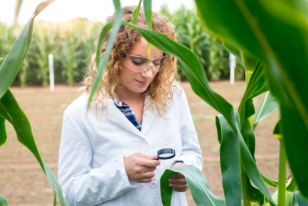 Female agronomist using magnifier to check quality of corn crops in the field Free Photo