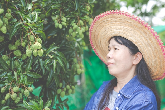 Female farmers check lychee in the garden. Free Photo