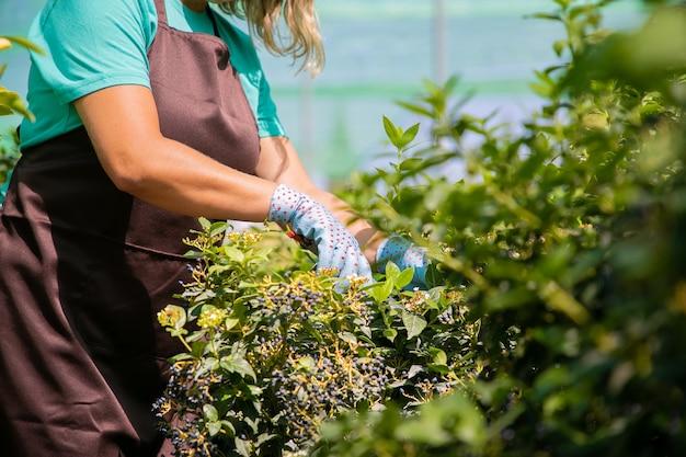 Cespuglio di taglio fiorista femminile con potatore in serra. donna che lavora in giardino, coltivazione di piante in vaso. colpo ritagliato. concetto di lavoro di giardinaggio Foto Gratuite