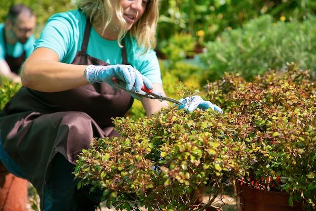 Giardiniere femmina piante da taglio con potatore in serra. donna che lavora in giardino. colpo ritagliato. concetto di lavoro di giardinaggio Foto Gratuite