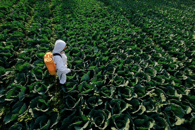 Female gardener in a protective suit and mask spray fertilizer on huge cabbage vegetable plant Premium Photo
