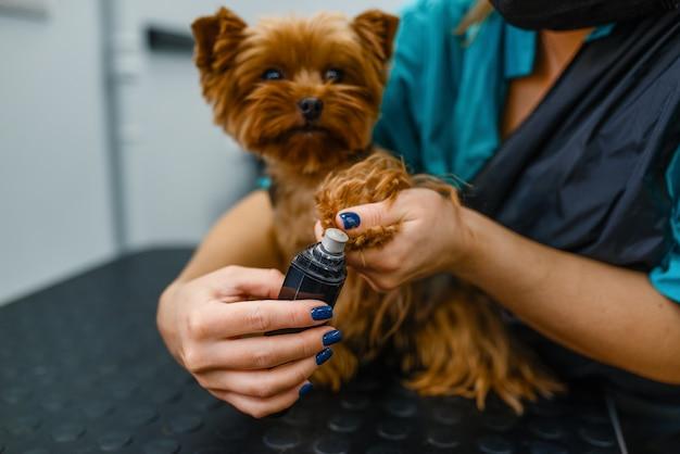 かわいい犬の爪を磨く女性グルーマー、グルーミングサロン。 Premium写真