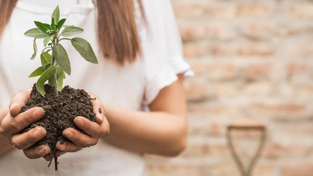 Female hand holding seedling with soil Free Photo
