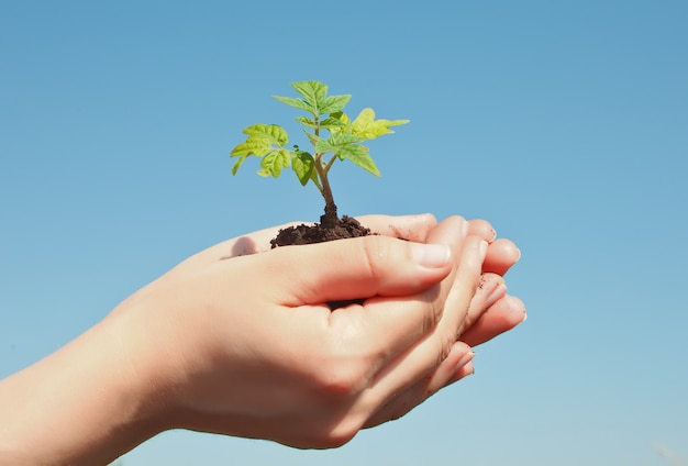 Female hand holding sprout. earth day save environment concept. growing seedling forester planting. Premium Photo