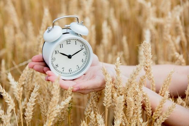 小麦畑でヴィンテージ目覚まし時計を持っている女性の手 Premium写真