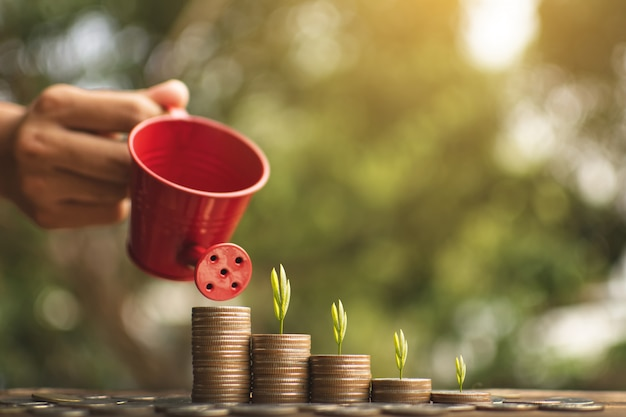 Female hand holding a watering can  sprinkle to a coins and sprout on wood plank. Premium Photo