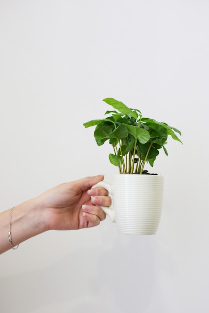 Female hand holds a white cup with green plant Premium Photo