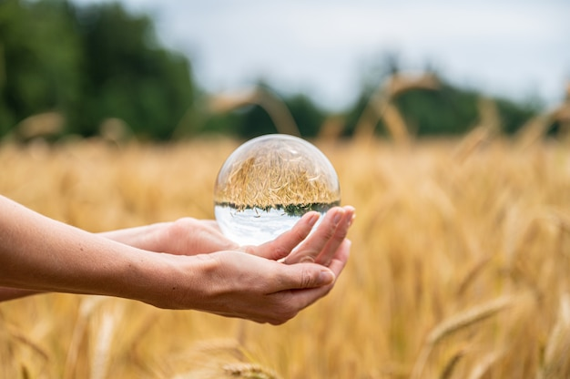 麦畑に水晶球をかざす女性の手 Premium写真