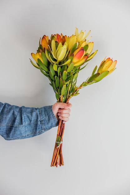 Female hands holding bouquet of leucadendron Premium Photo