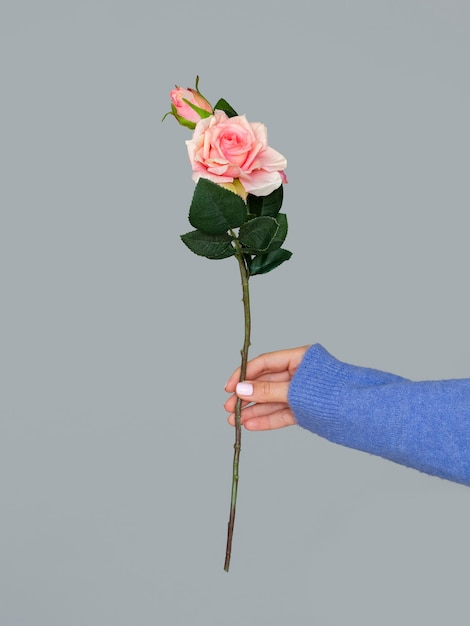 Female holding beautiful rose Free Photo