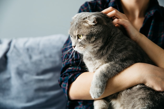 Female holding on hands cat Free Photo