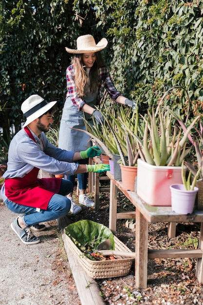 Female and male gardener taking care of aloevera plants on table in the garden Free Photo