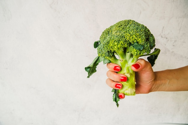 Female's hand holding raw green broccoli on white textured backdrop Free Photo