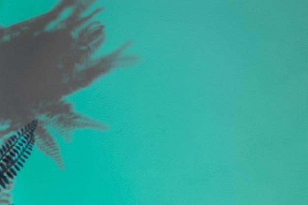 Fern dark leaves on turquoise backdrop Free Photo
