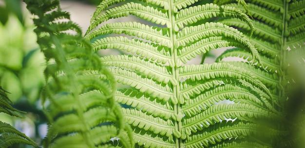 Fern leaf leaf of a green plant Premium Photo