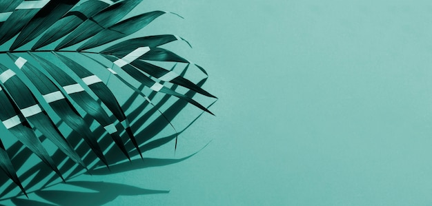 Fern leaves with copy space background Free Photo