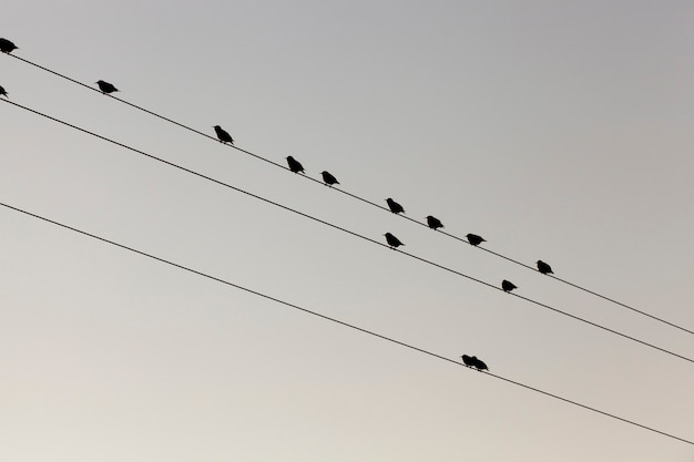 하늘을 향한 고전압 전기 기둥에 앉아있는 작은 새 몇 마리가 휴식을 취합니다. 클로즈업 하단 촬영. 프리미엄 사진