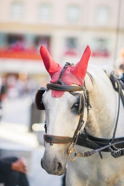 ウィーンオーストリアの伝統的な馬コーチfiaker Premium写真