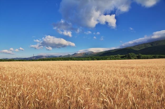 Fied in mountains of bulgaria Premium Photo