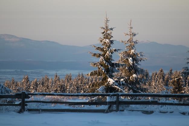 Campo coperto di sempreverdi e neve con montagne sotto la luce del sole Foto Gratuite
