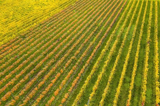 Campo coperto di erba e fiori colorati sotto la luce del sole Foto Gratuite