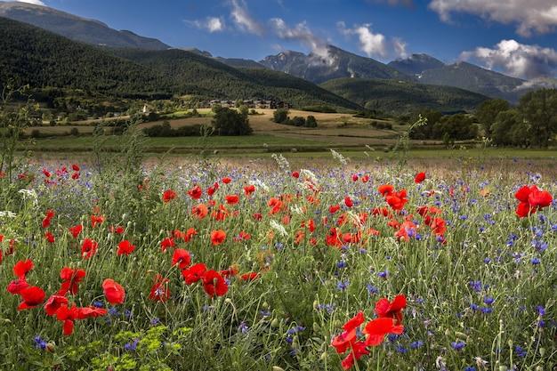 Поле, покрытое красными маками, окруженное горами под солнечным светом Бесплатные Фотографии