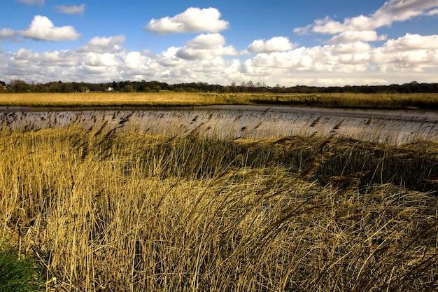 Поле, покрытое травой, в окружении реки альда под солнечным светом в великобритании Бесплатные Фотографии