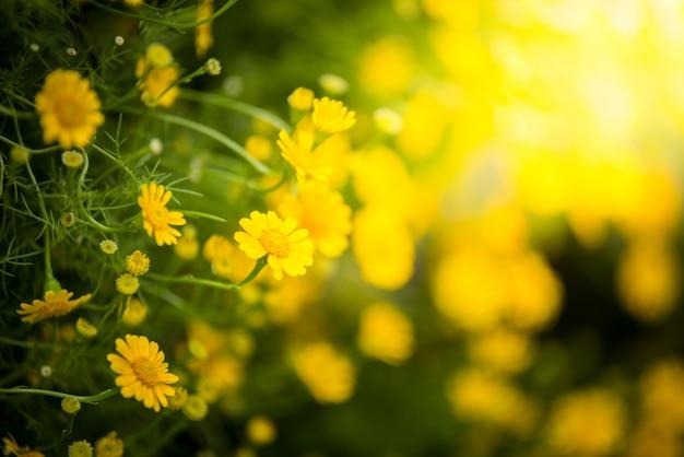 Field of dahlberg daisy Premium Photo