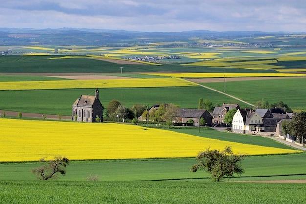 Field eifel minkel landscape oilseed rape Free Photo
