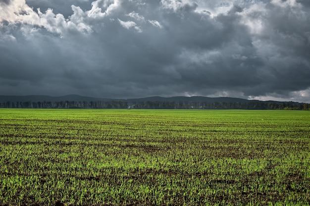 農業分野では、冬コムギや穀物の若い芽が土壌から発芽し始めました Premium写真