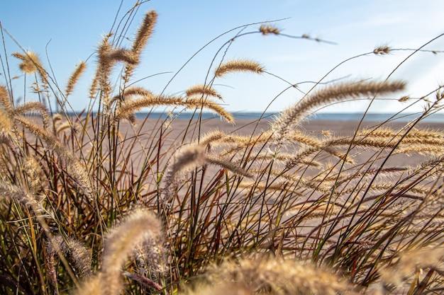 Поле травы в степной зоне в солнечном свете крупным планом. летняя природа. Бесплатные Фотографии