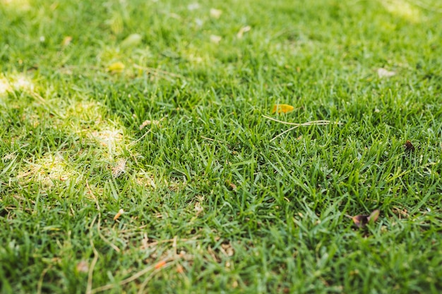 Field of green grass Free Photo