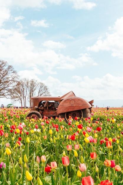 真ん中に古いさびたトラクターで咲く美しい色とりどりのチューリップのフィールド 無料写真
