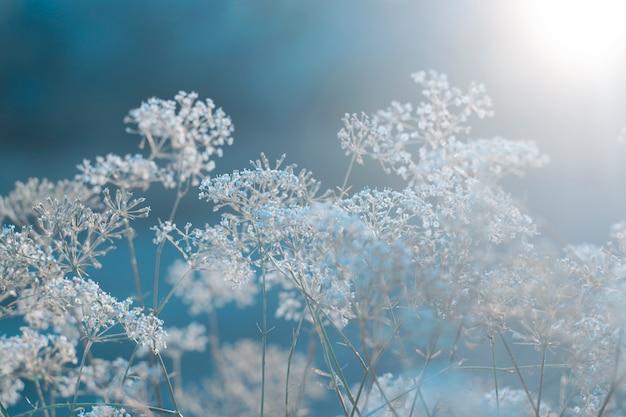 Field plant background on winter blue Premium Photo