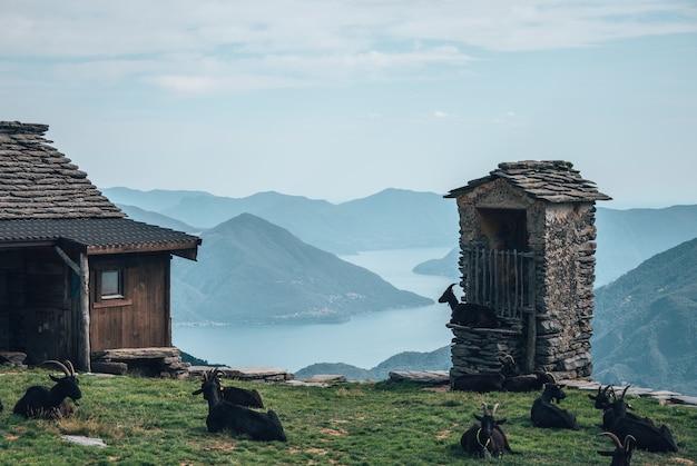Campo circondato da edifici e capre nere con colline e un fiume sullo sfondo Foto Gratuite