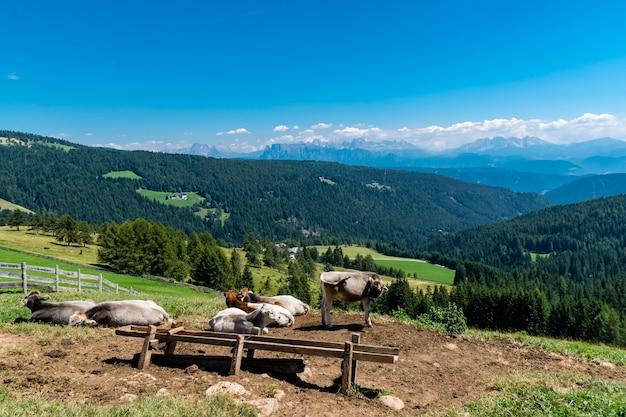 昼間の日差しの下で森に覆われた子牛と山々に囲まれた畑 無料写真