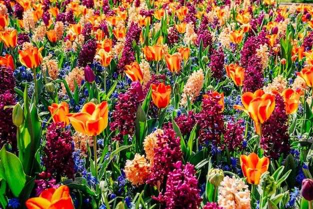 Field of wild flowers. Premium Photo